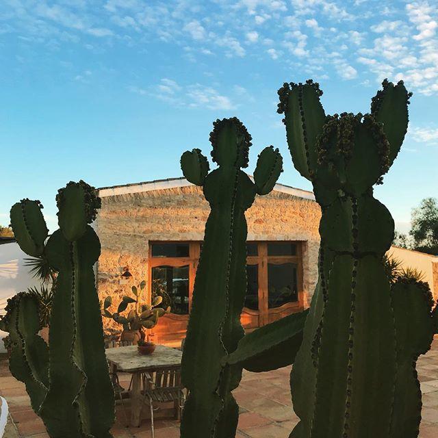 🌵🌵🌵 #lascicadasibiza #boutiquevilla #barn #patio #hacienda #rustic #stylish #farmhouse #finca #casapayesa #cactus #mediterranean #islandlife #ibiza