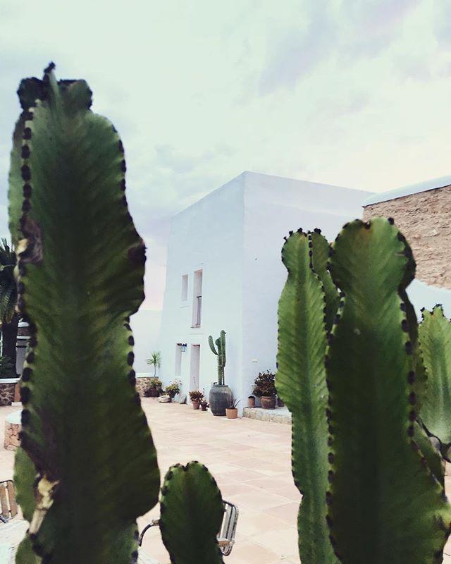 Good Morning Good Looking 🙌🏼🌵💛 #lascicadasibiza #boutiquevilla #photogenic #finca #farmhouse #villa #casapayesa #holidayhome #vacationvilla #santagertrudis #ibiza #heartoftheisland #goodlife #cactus #ibizastyle